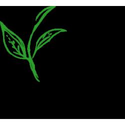 Japan Green Bancha