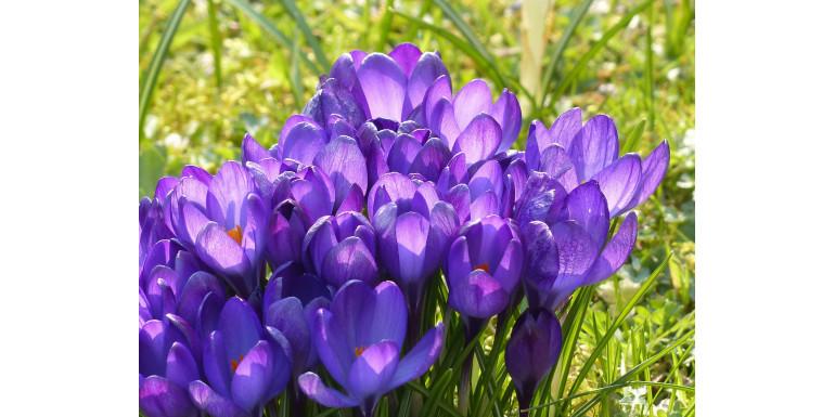 Witamy wiosnę! Herbaty zielone -10% do końca tygodnia. Zapraszamy